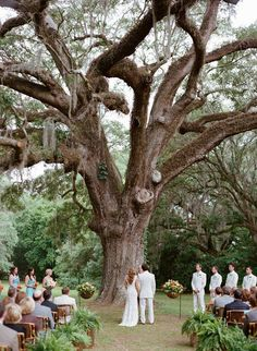 Charleston Wedding by Alice Keeney and Ooh! Events – Southern Weddings Magazine Charleston Wedding by Alice Keeney and Ooh! Wedding Ceremony Ideas, Outdoor Ceremony, Wedding Venues, Wedding Ceremonies, Outdoor Weddings, Oak Tree Wedding, Forest Wedding, Woodland Wedding, Dream Wedding