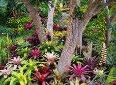 Maravillas tropicales