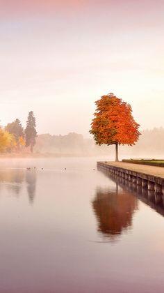 Trees-autumn-nature-landscape-iPhone-Wallpaper