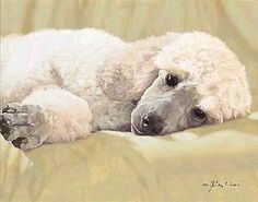 """Best Loved Breeds - Standard Poodle"" by John Weiss"