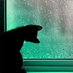 Something about this image has captured my imagination. The cat's curiosity at the rain is just too sweet. /ES