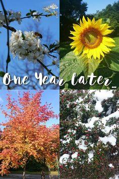 One Year Later... First Year, Dandelion, Glitter, Flowers, Plants, Blog, Dandelions, Blogging, Plant