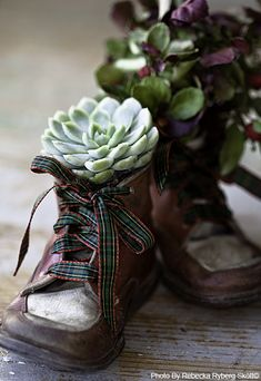 Old shoes as planters.  I would cut holes in the toes so the plant would sprout from there as well.