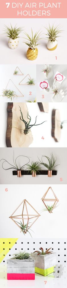 7 DIY Air Plant Holder Round Up - Hello Luvvy
