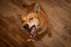 Um cachorro adulto tem 42 dentes.