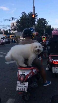 ይህንን ውሻ ምን እማራለን Cute Funny Dogs, Cute Funny Animals, Cute Baby Animals, Animals And Pets, Cute Animal Videos, Funny Animal Pictures, Super Cute Animals, Funny Dog Videos, Pet Birds
