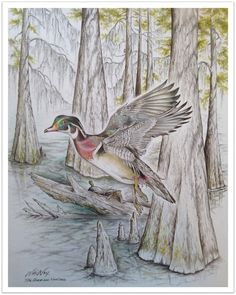 The American Wood Duck by W.H.Wax available at whwax.com