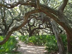 Cumberland Island.  Vacationed here during the summer as a kid.