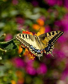 ~~Beautiful Butterfly by Brendan McCue~~