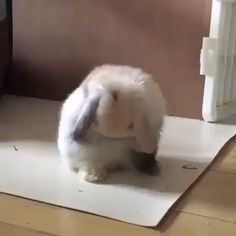 Give it a facewash😍🤣😂 – Cony - Baby Animals Funny Bunny Videos, Cute Animal Videos, Cute Little Animals, Cute Funny Animals, Cute Cats, Cute Baby Bunnies, Cute Babies, Cute Bunny Pictures, Pet Birds