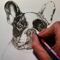 sketch , sketchbook , frenchie , french bulldog , illustration , Jeroen Teunen , Teunen