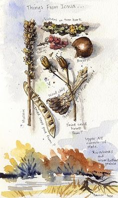 Sketching in Nature: My curiosity cabinet ~ Elizabeth Smith. Nature, journal, sketchbook, notebook, dairy, words and images, drawing.