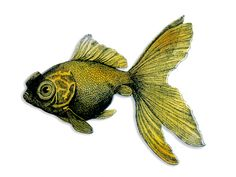 Acryl Brosche vintage Goldfisch von Dear Prudence auf DaWanda.com
