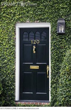 use creeping fig or ivy.USA, South Carolina, Charleston, Black Door with Brass accessories in Ivy covered facade of Early American Rowhouse Entry Stairs, Door Entryway, Entrance Doors, Black Front Doors, Front Door Colors, Outdoor Landscaping, Outdoor Decor, Magical Tree, Charleston Homes