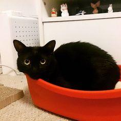 #cat #catstagram #ilovecats #blackcat #favoriteplace #ねこ部 #ねこ #くろねこ #黒猫 #黒猫同盟 #えへへ #僕のお気に入りの場所でもあるのさ