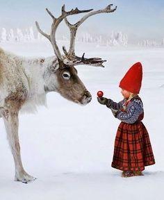 So adorable... ❤️ 🍎 📷Credit: @_thewishbooks #christmas #thechristmaswish #reindeer #snow #adorable