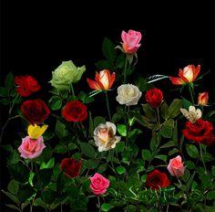Resultado de imagen de ANIMATED FLOWERS BEAUTIFUL AND GLITTER