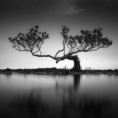 Photography Pricing, Photography Words, Semarang, Contemporary Photography, Landscape Photography, South Korea Photography, Art Noir, Spiritus, Black Tree
