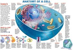 Anatomy of a Cell - Click thru to download this FREE infographic!