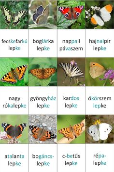 lepkés memóriakártyák Diy For Kids, Crafts For Kids, Tree Day, Insect Crafts, Home Learning, Activity Sheets, Reggio Emilia, Earth Day, Life Cycles