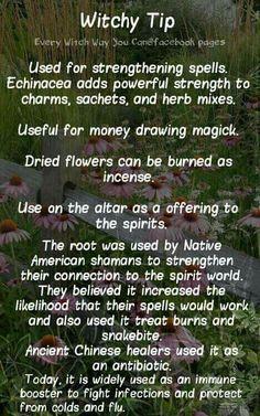 Herbal Magick | Spellwork - Echinacea