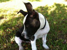 Puppy Lucky!!