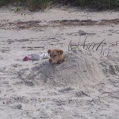 A good sport at our dog friendly beach....Smyrna Dunes Park