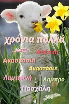 Name Day, Teddy Bear, Quotes, Animals, Quotations, Animales, Animaux, Saint Name Day, Teddy Bears