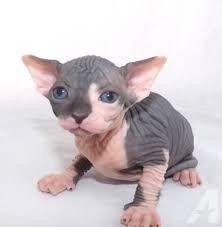 sad cat images