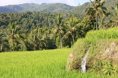 will-on-board «Subak» is at the heart of balinese philosophy mixing up spirit, human being and nature. (photo by B. Hervé)