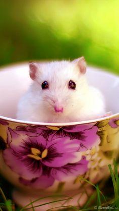 Egérke Csodaországban háttérkép - Mouse in Wonderland background- iPhone 6 ©iSzerelés www.iszereles.hu