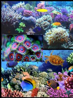 Coral reefs...