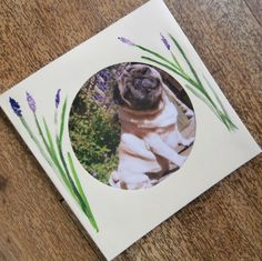 Pug Card by onelittlepug on Etsy