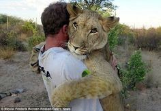 You've heard of bear hugs. Well this is a lion hug i love this picture.