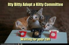 """To place a hold for a pet: Go to www.adoptgastonpets.com and click """"View Shelter Pets"""". Under each pet's listing there is a link to place an e-mailed hold. If you are on a mobile device that does not support Adobe, you can e-mail: lbenton@gcps.org, mbfirefly@gmail.com and gastonsupport@msn.com  You may make a hold by phone, but a hold in writing is preferred. Holds must be placed BEFORE 8 AM on the pet's """"Release Date"""" and the tag number of that pet should be referenced in the subject line…"""