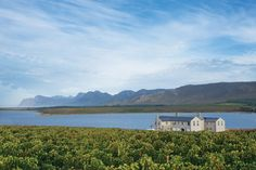 Positioned at the start of the Hermanus Wine Route – surrounded by the majestic Palmiet Mountains and approximately a from the Mother City – Benguela Cove Lagoon Wine Estate sits pretty ove Lush Green, Harvest, Vineyard, Sunday, Wine, Mountains, Places, Travel, Beautiful