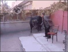 Toro en la calle - PELIGRO latente { GIF } #animales #extremo #susto