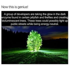 Daan Roosegaarde is interested in lighting streets without using electricity and is working with scientists at the State University of #NewYork and a company called Bioglow to bring his vision to life. #DiluteThePower