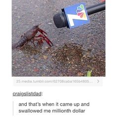 lol it's funny because it's not a crab Funny Memes, Hilarious, Jokes, Spongebob Memes, Spongebob Squarepants, Spongebob Tumblr, Lol, Funny Tumblr Posts, Just For Laughs