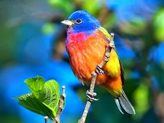 beautiful animal pictures wallpaper | Colorful bird picture beautiful animals HD Wallpaper