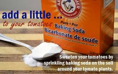 Sprinkle baking soda on the top of the soil surrounding your tomato plant (making sure not to get any on the plant itself).  This simple garden trick really works! The baking soda absorbs into the soil and produces tomatoes that are more sweet than tart.