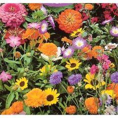 Wildflower Seeds- 1000+ Low Growing $2.99