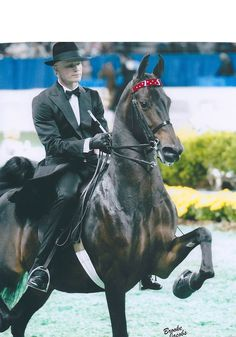 The American Saddlebred | CH Swing An Singing and Smith Lily