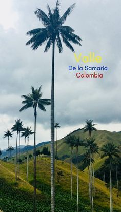 If Samaria wasn't in Colombia, it might be firmly in the sights of every South American backpacker. Instead, it is a forest of wax palms set against a surreal green valley. And, excuse the cliche, it is truly undiscovered! Join me on a journey to uncover one of South America's true travel secrets… #travelsecrets