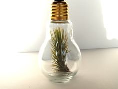 $14.95 - air plant in light bulb