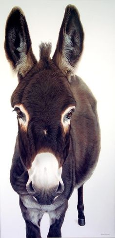 Listen for FREE a 25 min Audio Stage Play about a magical #donkey. TicklingDragon.com Image:Ester Curini