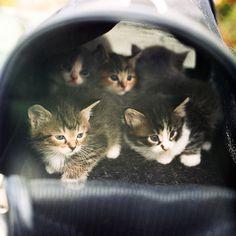 All the little Kitties.