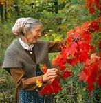 Tasha's flowers