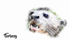 Graphic Art and Web Design. Forbesy brand is creative centre where we create print graphics and web design ideas as well as adventure accessories and apparel. Giant River Otter, Adventure Outfit, Otters, Graphic Art, Unique, Collection, Design, Otter