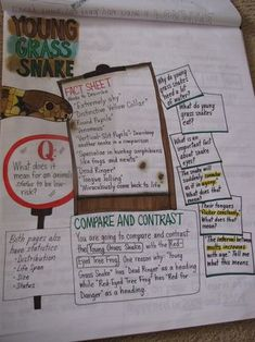 Group research anchor chart/ bulletin board project display